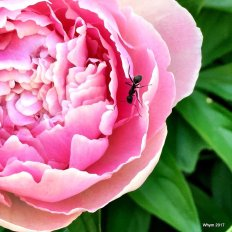 An ant finds a lovely resting place