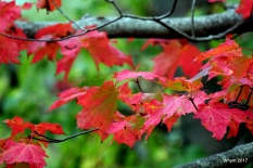 Fall in Red 3