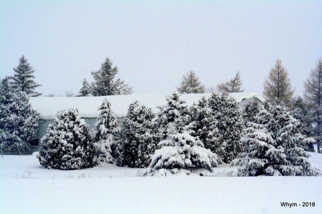 Snowshield