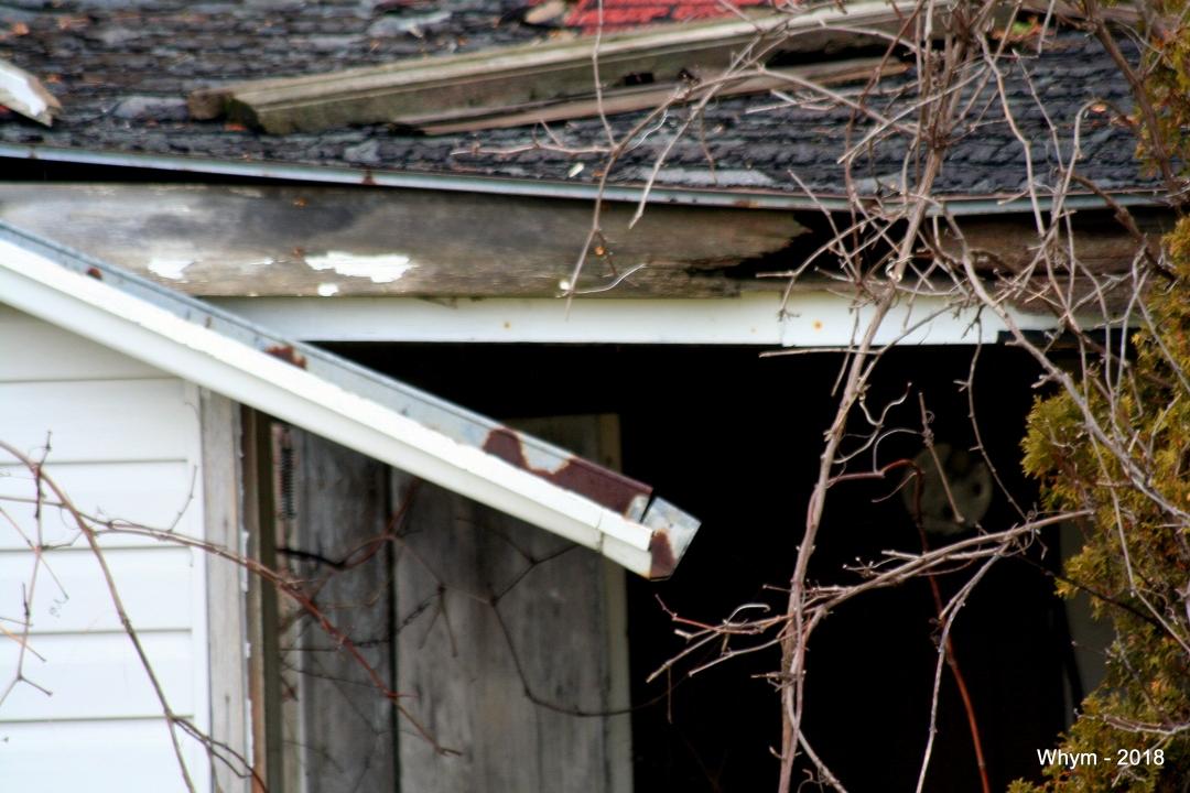 Abandoned house_3.jpg